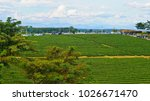 tea plantation in chiang rai ... | Shutterstock . vector #1026671470