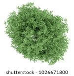 top view of tulip tree isolated ... | Shutterstock . vector #1026671800