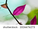 purple leaves with natural soft ... | Shutterstock . vector #1026676273