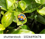 macro photo of the tea bug  ... | Shutterstock . vector #1026690676