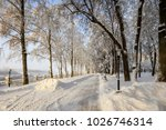 winter park with trees covered...   Shutterstock . vector #1026746314