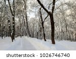 winter park with trees covered... | Shutterstock . vector #1026746740
