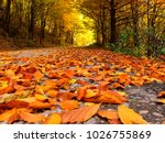 Fallen Leaves Pathway In The...
