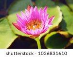 lotus. flower beautiful lotus   Shutterstock . vector #1026831610