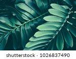 tropical jungle foliage  dark... | Shutterstock . vector #1026837490