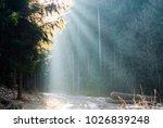 sunbeam in forest | Shutterstock . vector #1026839248