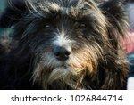 portrait of a black dog that... | Shutterstock . vector #1026844714