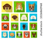 dog breeds flat icons in set... | Shutterstock . vector #1026860968