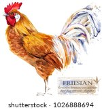 friesian rooster. poultry... | Shutterstock . vector #1026888694