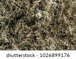 development of green mold on... | Shutterstock . vector #1026899176