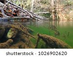a beaver plantation in a pond ... | Shutterstock . vector #1026902620