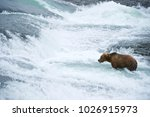 american brown bear grizzly... | Shutterstock . vector #1026915973