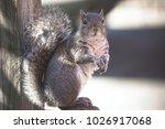Squirrel Very Surprised