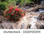 blooming bougainvillea. magenta ...   Shutterstock . vector #1026920254