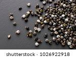 job's tears   coix lachryma... | Shutterstock . vector #1026922918