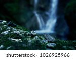 paradise jungle forest with... | Shutterstock . vector #1026925966
