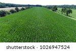 aerial photo of narrow corn...   Shutterstock . vector #1026947524