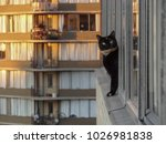 Black Cat Looking Out Window I...