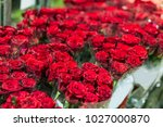 beautiful fresh red roses at... | Shutterstock . vector #1027000870