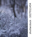 winter background  close up of... | Shutterstock . vector #1027011454