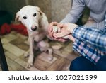 happy family at animal shelter... | Shutterstock . vector #1027021399