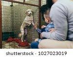 happy family at animal shelter... | Shutterstock . vector #1027023019