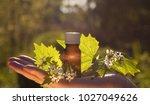fresh herbs   natural remedies | Shutterstock . vector #1027049626