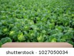 chinese cabbage field defocus... | Shutterstock . vector #1027050034