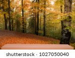colorful autumn forest defocus... | Shutterstock . vector #1027050040