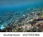 sealife of champagne bay ... | Shutterstock . vector #1027055386