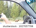 taking a photo of a grizzly | Shutterstock . vector #1027057708