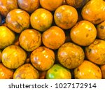 orange is the fruit of the... | Shutterstock . vector #1027172914