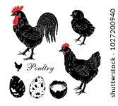 poultry farm. rooster  hen ... | Shutterstock .eps vector #1027200940