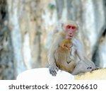 baby monkey sleeping on his...   Shutterstock . vector #1027206610