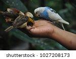 bird in hand | Shutterstock . vector #1027208173