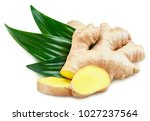 ginger with leaves isolated on... | Shutterstock . vector #1027237564
