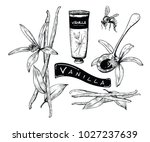 vanilla flower and beans with... | Shutterstock .eps vector #1027237639