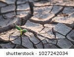 Growth Of Trees In Drought ...