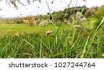 flying bees in springtime | Shutterstock . vector #1027244764