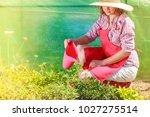 gardening. woman in hat red... | Shutterstock . vector #1027275514