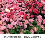 colorful blooming roses | Shutterstock . vector #1027280959