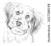 fluffy mongrel dog vector hand... | Shutterstock .eps vector #1027288198