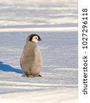 a solitary emperor penguin...   Shutterstock . vector #1027296118