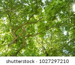 nature background with green... | Shutterstock . vector #1027297210