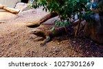 iguana in zoo. varanus... | Shutterstock . vector #1027301269