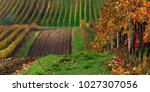 Autumn Vineyard Panorama - Fine Art prints