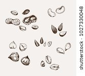 set of hand drawn nuts. | Shutterstock .eps vector #1027330048