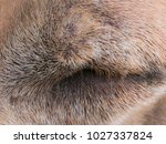 the brown dog with eye closed | Shutterstock . vector #1027337824