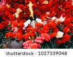 background of red carnations ... | Shutterstock . vector #1027339048