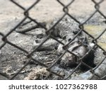 Small photo of The dead monkey died in the cage. It is very cruel. And make it die anat.